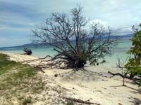 Vegetasi tanaman liar di Pulau Kanawa