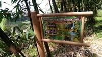 Wisata sambil belajar mengenal macam-macam bambu