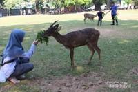 Salah satu kegiatan yang bisa dilakukan di tempat ini adalah memberi makan rusa . Pengunjung bisa membeli sayuran dari pedagang yang ada di sana.