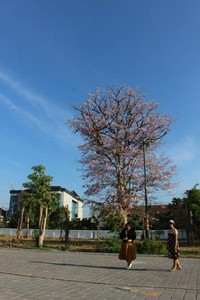 Di bagian depan bangunan , dekat lokasi parkir terdapat pohon yang tengah berbunga dan menjadi lokasi berfoto yang cantik.