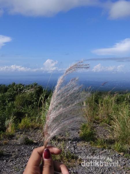 View trekking dengan ilalang yang sudah terjatuh