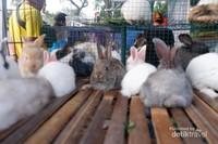 Kelinci-kelinci mungil yang lucu