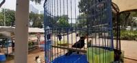 Aneka hewan peliharaan seperti burung beo juga bisa ditemukan di pameran Flona