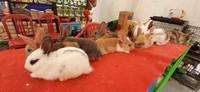Bagi pecinta hewan, ada juga berbagai hewan peliharaan imut seperti kelinci yang bisa dibeli