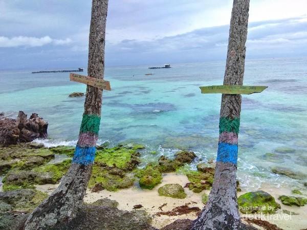 Pohon kelapa yang dipasangi papan bertuliskan rayuan jenaka