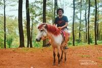 Berkuda sambil menikmati segarnya udara, hutan pinus Malino