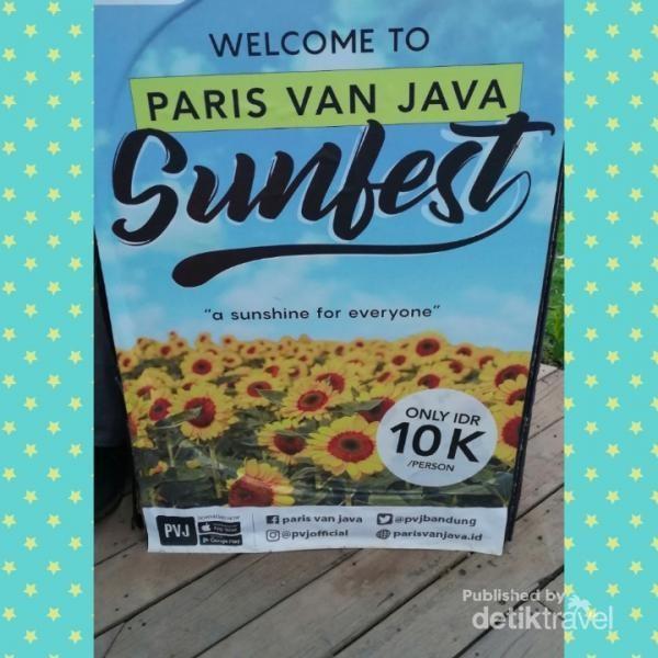 Bunga Matahari yang Viral di Bandung