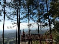 Melihat lanskap Yogyakarta dari atas ketinggian pohon pinus