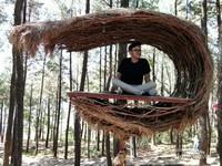 Spot foto berbentuk sarang yang berada  di ketinggian pohon pinus