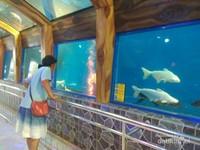 Ada banyak wahana tersedia, sebut saja Toyoshuka Planet Aquarium, yang bisa disebut sebagai Sea World nya Purbalingga, di sini pengunjung bisa melihat berbagai macam jenis ikan. Bahkan ada ikan yang langsung didatangkan dari Sungai Amazon.