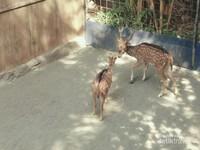 Selain itu ada hewan lain yang bisa kita lihat di sini, yang dipelihara bebas di alam terbuka.