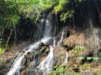 Paduan jatuhan air dan juntaian akar yang membentuk tirai sebuah Goa.