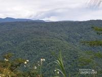 Hutan tropis yang lebat dan virgin terbentang sepanjang perjalanan Manokwari-Lembah Kebar