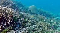 terumbu karang di balabalakang dihuni banyak schooling fish dan berbagai macam ikan ikan karang.