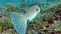banyak ikan-ikan penghuni karang.