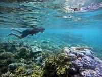 Terumbu karang di balabalakang sangat dekat dengan pantai hingga batas tebing laut.