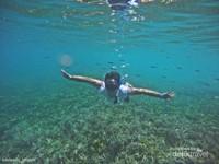 Kamu bisa snorkeling dimanapun di Balabalakang.