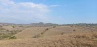Ada 3 jenis sarang komodo bertelur, sarang gundukan, sarang bukit, sarang permukaan tanah