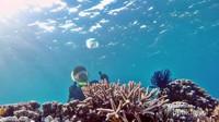 terumbu karang kepulauan balabalakang mantab jiwa