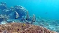 berbagai macam ikan karang selalu ada di tiap sisi karang
