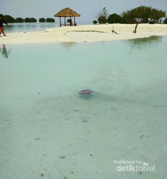 Pantai yang dangkal, anak anakpun aman bermain
