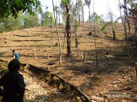 Tampak ladang pertanian yang baru selesai panen, yang ada di perbukitan tinggi