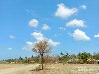 Pulau Masalembu Tandus dan gersang