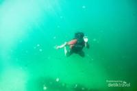 Menyelam dengan dikelilingi banyak ubur ubur.