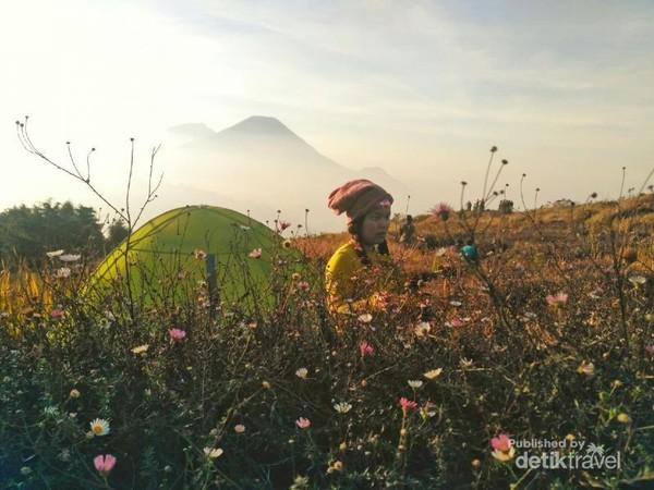 Foto di antara bunga Daisy dengan latar belakang puncak gunung sindoro dan dumbing.