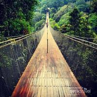 Kayu Ulin dari Papua yang menjadi bahan dasar jembatan gantung ini