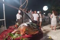 Dinner - Makan malam dengan tema White dinner on beach menjadi momen paling ditunggu-tunggu, dimana semua pengunjung berbaur dan makan bersama
