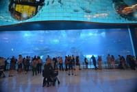 Dubai Aquarium yang ada di dalam Dubai Mall.