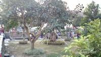 Area taman yang asri
