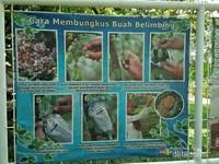 Terdapat juga beragam tips untuk budidaya tanaman buah