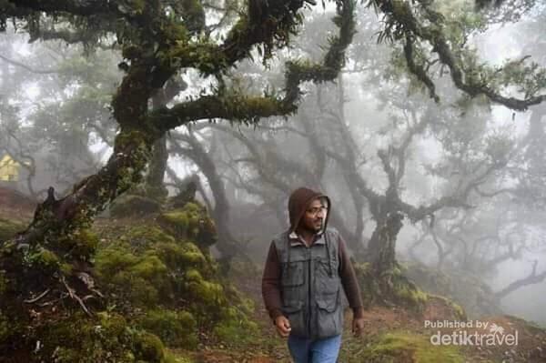 Hutan bonsai yang berumur sekitar ratusan tahun