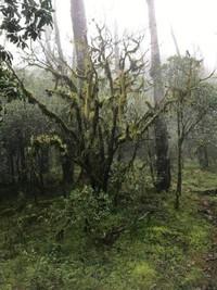 pohon bonsai ditempat ini sudah berlumut dan tua sehingga menghasilkan keindahan tersendiri bagi kalian yang melihatnya