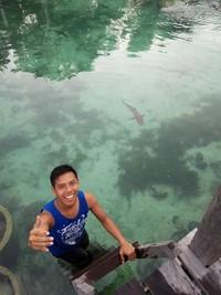 Berfoto dengan hiu yang ada di penangkaran