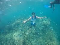 Terumbu karang yang masih terjaga dan banyak ikan