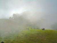 hijau, berkabut dan tenang menjadi ciri khas desa ini.