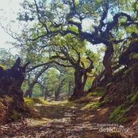 Hutan Bonsai yang berumur lebih dari seratus tahun.