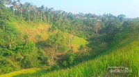 Hijaunya lembah-lembah kecil di sekitar Bukit Campuhan, Ubud.