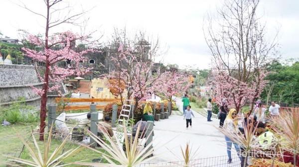 Beberapa pohon yang berupa tanaman buatan seperti bunga sakura