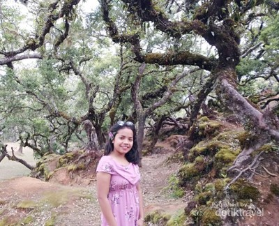 Hutan yang Terlihat Seram nan Keren, Namanya Fatumnasi