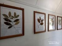 Aneka daun herbarium yang tumbuh di Pulau Tarakan.