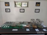 Koleksi taxidermy hewan endemik Pulau Tarakan.