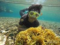 keindahan bawah laut pahawang