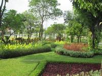 Keindahan tanaman di taman tugu Pahlawan.