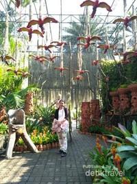 Nong Noch Tropical Garden