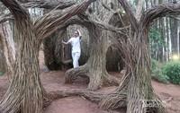 Pinus Pengger, Dlingo - Jogja