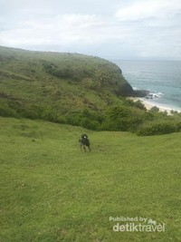 Merangkak di hamparan rumput hijau  (Yoga/dtravelers)